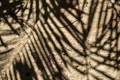 Fondo riempito di sabbia marrone chiaro del pavimento con naturalmente il beautifu Immagine Stock