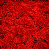 Fondo rojo artificial de la flor Fotografía de archivo libre de regalías
