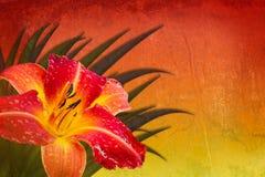 Fondo rojo de amarillo anaranjado con daylily Imagen de archivo