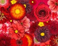 Fondo rojo de la flor Fotos de archivo libres de regalías