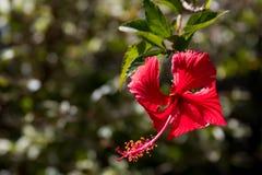 Fondo rojo de la flor Imagen de archivo libre de regalías