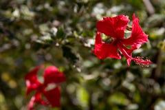 Fondo rojo de la flor Foto de archivo libre de regalías