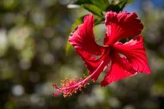 Fondo rojo de la flor Imagenes de archivo