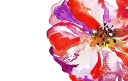 Fondo rojo de la flor de la amapola de la acuarela brillante Imagen de archivo libre de regalías