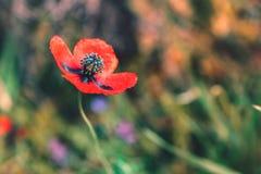 Fondo rojo de la naturaleza de la flor imagenes de archivo