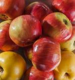 Fondo rojo de las manzanas Fotos de archivo libres de regalías