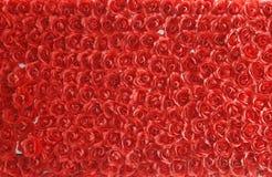 Fondo rojo de las rosas Fotos de archivo