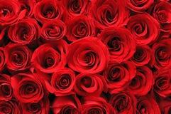 Fondo rojo de las rosas Imagen de archivo