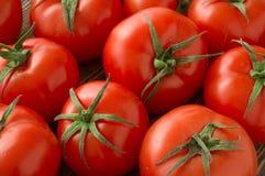 Fondo rojo de los tomates Imágenes de archivo libres de regalías