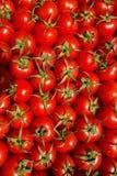 Fondo rojo de los tomates Grupo de tomates Fotos de archivo