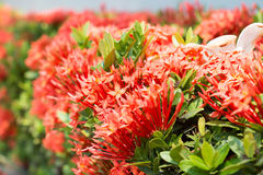 Fondo rojo de opinión de la flor Fotos de archivo