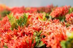 Fondo rojo de opinión de la flor Fotos de archivo libres de regalías