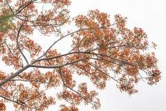 Fondo rojo del blanco de las hojas de la flor y del verde Fotografía de archivo
