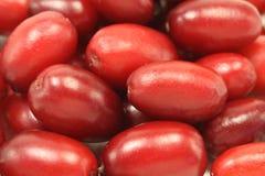 Fondo rojo del cornejo de las bayas Foto de archivo libre de regalías