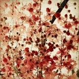 Fondo rojo del flor Imagen de archivo