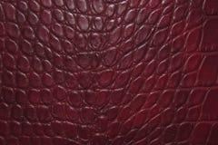 Fondo rojo oscuro de la textura de la piel del cocodrilo fotos de archivo libres de regalías