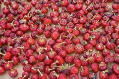 Fondo rojo secado de la paprika Fotografía de archivo libre de regalías