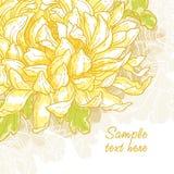 Fondo romántico con el crisantemo ilustración del vector