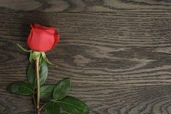 Fondo romántico con la rosa del rojo en la tabla de madera Imagen de archivo libre de regalías