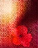 Fondo romántico de la flor Fotografía de archivo libre de regalías