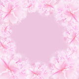 Fondo rosa Fotografia Stock