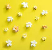 Fondo rosa bianco sparso di giallo del frangipane Fotografia Stock
