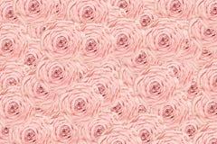 Fondo rosa claro de Rose Fotos de archivo libres de regalías