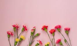 Fondo rosa con i fiori dei garofani e lo spazio della copia Vista superiore immagine stock