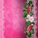 Fondo rosa con il confine floreale Fotografie Stock Libere da Diritti