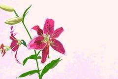 Fondo rosa d'annata del giglio Immagini Stock