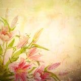 Fondo rosa dei gigli fotografie stock