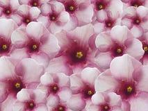Fondo rosa del fiore Fotografie Stock