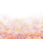 Fondo rosa del petalo di rose su bianco Immagini Stock