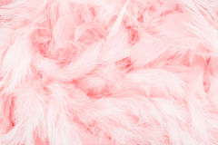 Fondo rosa della piuma Fotografia Stock