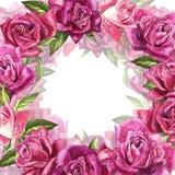 Fondo rosa naturale delle rose Pagina delle rose rosse e rosa, illustrazione dell'acquerello Fotografia Stock Libera da Diritti