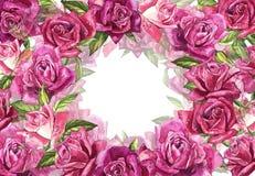 Fondo rosa naturale delle rose Pagina delle rose rosse e rosa, illustrazione dell'acquerello Immagini Stock