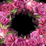 Fondo rosa naturale delle rose Pagina delle rose rosse e rosa, illustrazione dell'acquerello Fotografia Stock