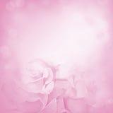 Fondo rosado con las flores color de rosa Foto de archivo