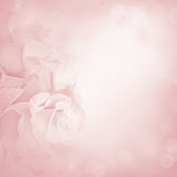 Fondo rosado con las flores color de rosa Fotografía de archivo libre de regalías