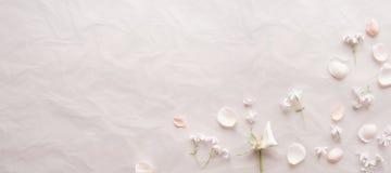 Fondo rosado con los pétalos Imágenes de archivo libres de regalías