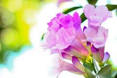 Fondo rosado de la flor Foto de archivo libre de regalías