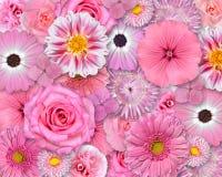 Fondo rosado de la flor Foto de archivo