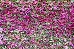 Fondo rosado de la flor. Foto de archivo