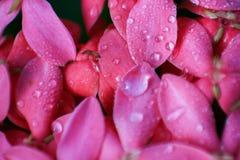 Fondo rosado de la flor imagen de archivo