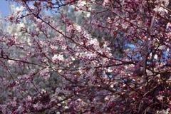 Fondo rosado de la flor Fotografía de archivo