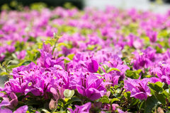 Fondo rosado 454 de la opinión de la flor Fotos de archivo