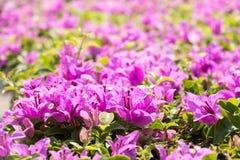 Fondo rosado de la opinión de la flor Imágenes de archivo libres de regalías