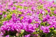 Fondo rosado de la opinión de la flor Fotos de archivo