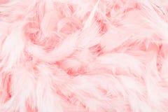 Fondo rosado de la pluma Fotografía de archivo