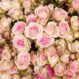Fondo rosado de las rosas Foto de archivo
